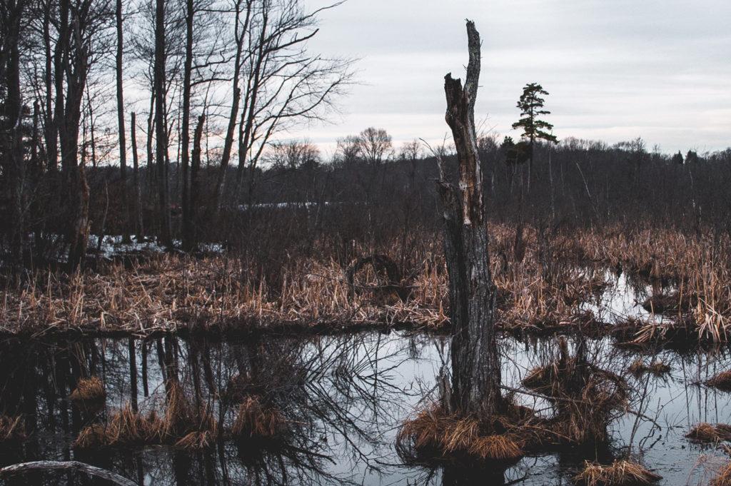 Waterlogged swamp.
